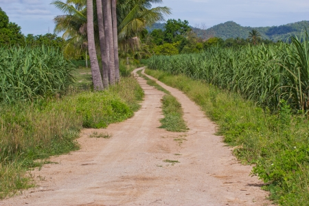 Countryside road in natural surroundings photo