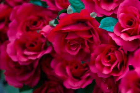 Red roses for Valentines Day photo
