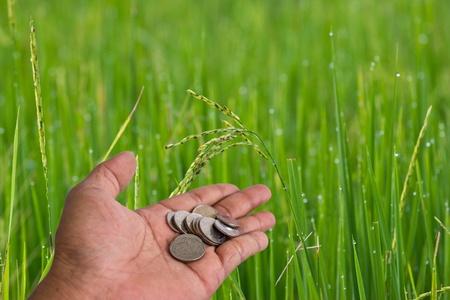 hand scatter coin  Rice farm at chon buri thailand photo