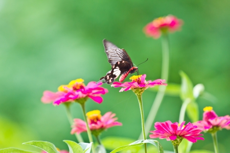 Flowers with butterflies photo