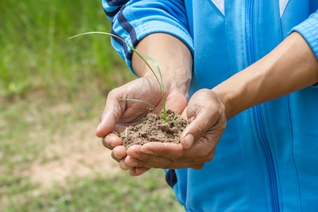person holding  small plant [ rice ] photo