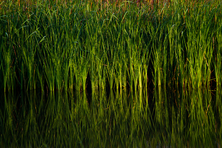 green aquatic plant photo