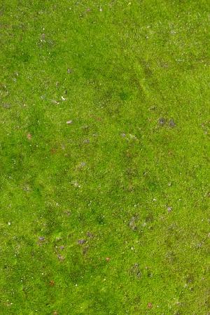 Green Moss. Seamless Tileable Texture. Stock Photo