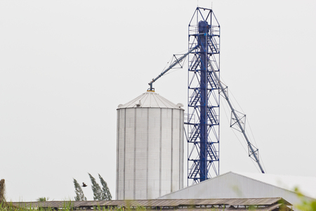 silos standing in a field of corn photo