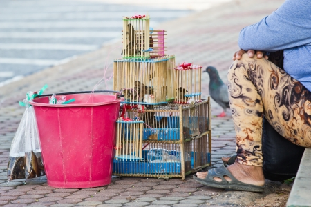 abandonment: bird in  cage , for use in making merit with the abandonment