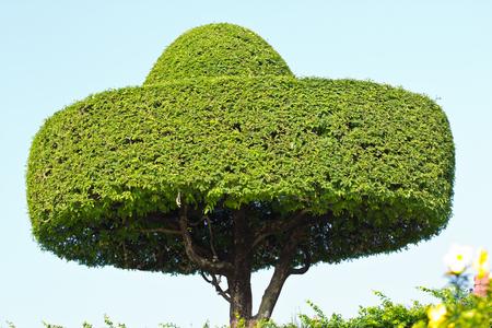 Baum Im Garten Schatten: Leeren garten baum schwingen im sommer mit ...
