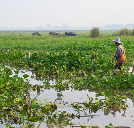 zoogdier: zoogdier, Thaise buffels in het gras veld