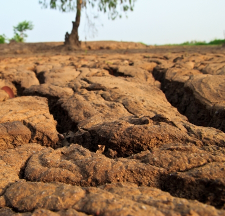 dry earth texture at thailand photo