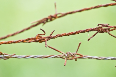 Barbed wire on  background photo