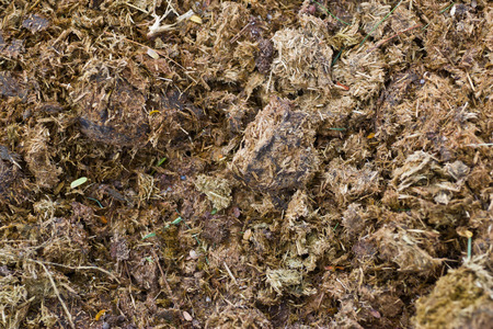 manure: horse manure