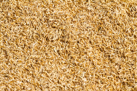 Dry straw background photo