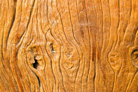 The background of wood photo