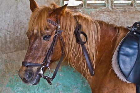 Head of horse photo