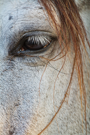 Horse eye close up in high key photo
