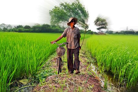 man riding  bike on rice field photo
