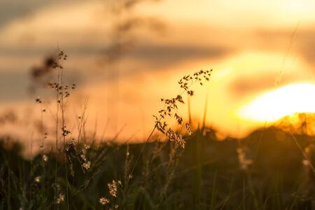 grass sunset photo