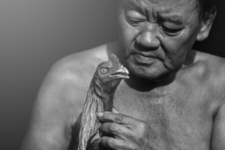 fighting cock: fighting cock that Cholburi Stock Photo