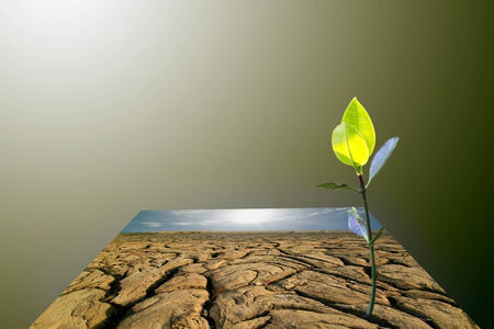 young plant on dry earth texture at thailand photo
