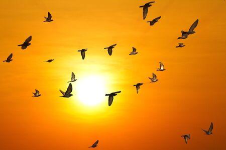 palomas volando: palomas (palomas) volando en el cielo Foto de archivo