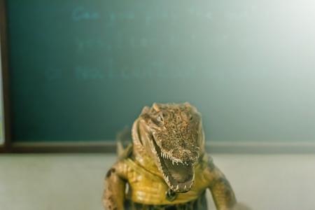 crocodile Coaching photo