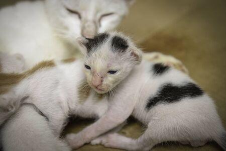 close up little kittens, Cat nursing
