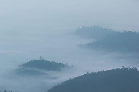 blue mountains tree frog: morning mist cover tree and mountain
