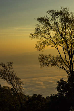 mistery: morning mist cover tree and mountain
