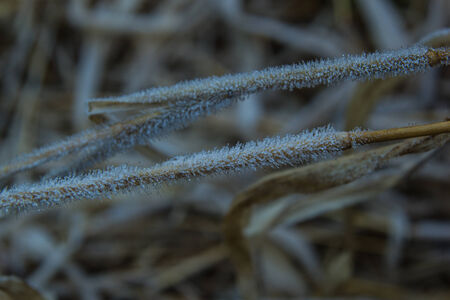 Frosty grass photo