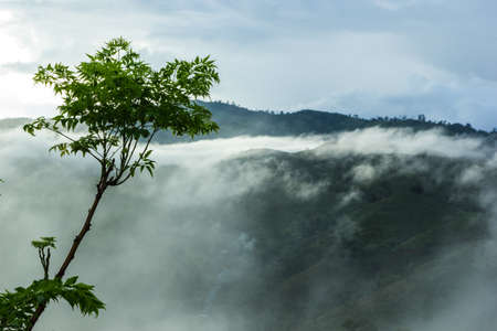 View of forest on Morning Mist at Tropical Mountain Range after rain fall, Thailand photo