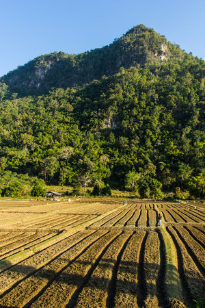 New ploughed field in front of a mountain in Thailand  photo