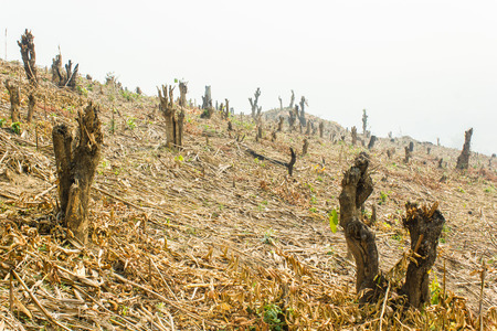 Slash and burn cultivation, rainforest cut and burned to plant crops, Thailand  Stock Photo
