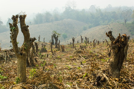 Slash and burn cultivation, rainforest cut and burned to plant crops, Thailand Stock Photo - 28384121