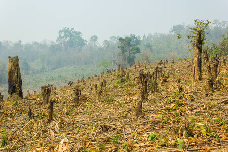 deforestation: Slash and burn cultivation, rainforest cut and burned to plant crops, Thailand  Stock Photo