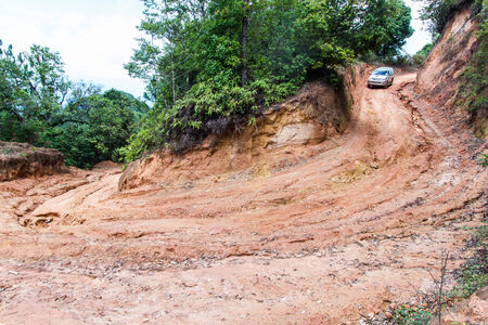 clay stone road in jungle: Rain Forest With A Dirt Road