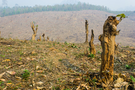 Slash and burn cultivation, rainforest cut and burned to plant crops, Thailand  Stock Photo - 28580753