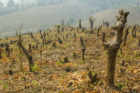 Slash and burn cultivation, rainforest cut and burned to plant crops, Thailand Stock Photo - 28580789