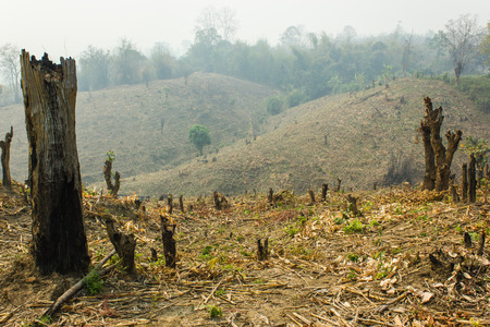 焼畑耕作熱帯雨林カットし、植物の作物、タイに書き込む