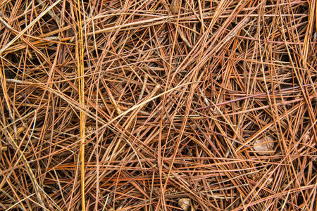 Great background texture of red fir needles