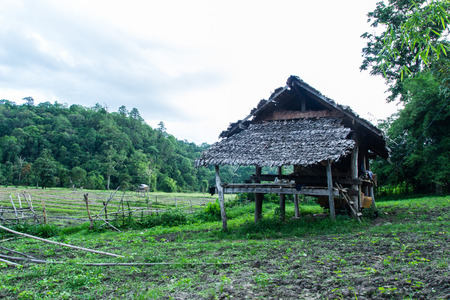 countrified: Hut  in field at rural, northern Thailand