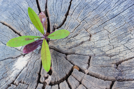 reborn: Green sapling growing from old tree stump Stock Photo