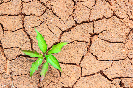 land plant: Green plant growing on cracked ground. Stock Photo