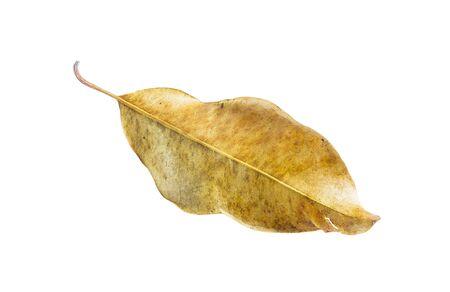 hojas secas aislados sobre fondo blanco.