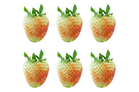 reckon: strawberry Stock Photo
