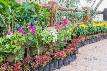 azaleas: Pretty manicured flower garden with colorful azaleas. Stock Photo