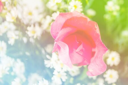 colorize: Abstract sweet fantasy flower with colourful filters in soft focus and blur style for background