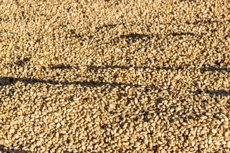 unroasted: Close up of white unroasted coffee beans background Stock Photo