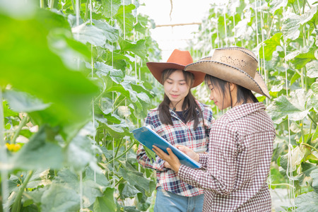Woman science Assistant ,Agricultural Officer. in greenhouse farm research melon