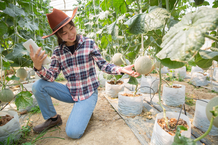 Farmer with tablet for working organic hydroponic vegetable garden at greenhouse. Smart agriculture, farm , sensor technology concept. Farmer hand using tablet for monitoring temperature. Stockfoto