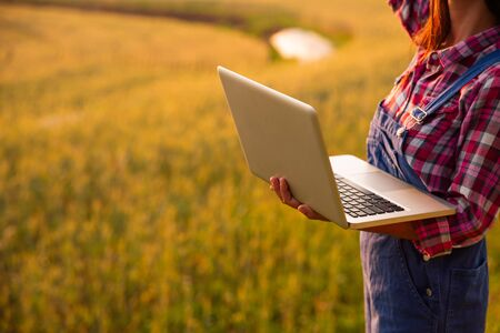 Female farmer using laptop computer in gold wheat crop field, concept of modern smart farming by using electronics, technology and mobile apps in agricultural production