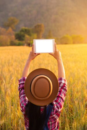 women hand with tablets in wheat crop field, concept of modern smart farming by using electronics, technology and mobile apps in agricultural production Stock Photo